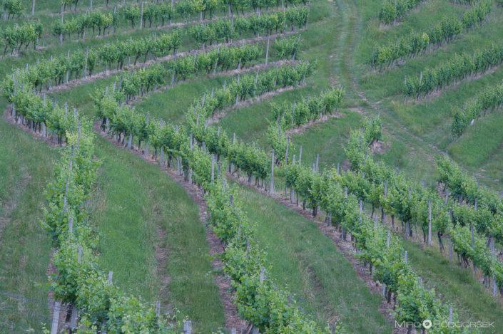 Wineyards, Kog